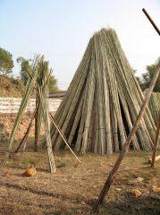 Bambus-dry